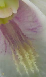 Orchid-106
