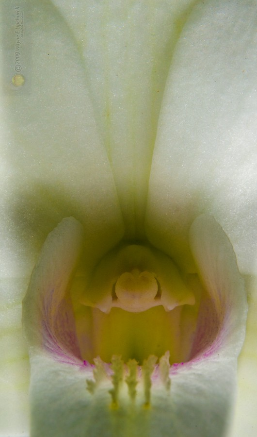 Orchid-139-2