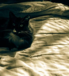"Shadow Cat - my cat, Chai, kindly leaves me his sheddings on my bed, most afternoons, where I can collect them with a sticky roller. Isn't that nice of him? I took all the color out of the original and used the ""split-tone"" function in Adobe Photoshop Lightroom 4.3, to get this warm tone."